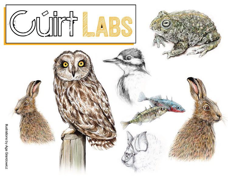 cuirt-labs-2019-web-version